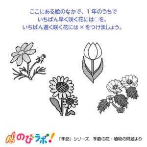 やってみよう「季節の花・植物」の問題8