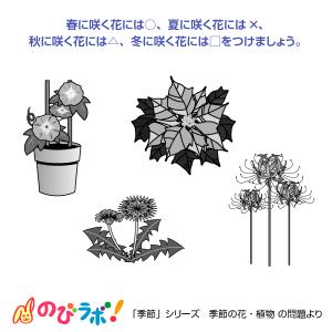 やってみよう「季節の花・植物」の問題6