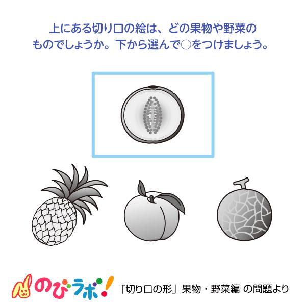 やってみよう「切り口の形(果物・野菜編)」の問題11