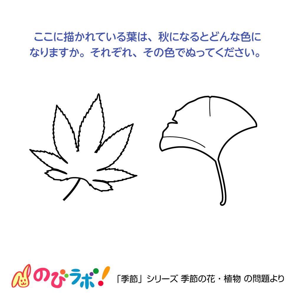 やってみよう「季節の花・植物」の問題9