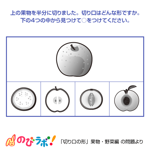 やってみよう「切り口の形(果物・野菜編)」の問題8